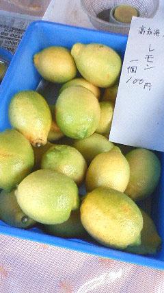 高知 日曜市 名物 レモン